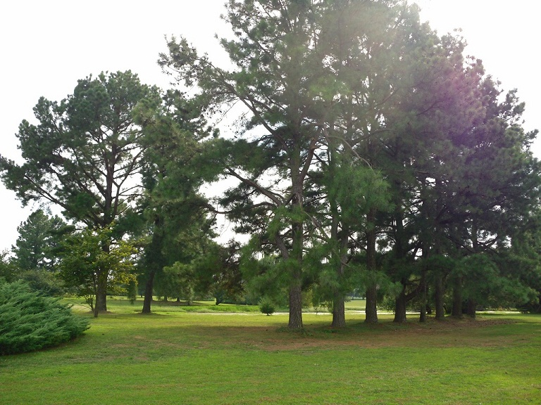 East Fork Golf Course